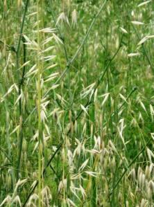 grass 015
